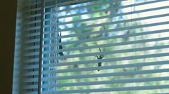 Two lizards challenge each other through the window Stock Footage