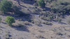 Antelope Herd Stock Footage
