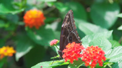 Butterfly taking off in slow motion Stock Footage