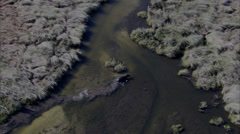 Hippo River Stock Footage