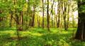 Blurred wood Footage