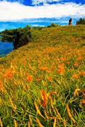 daylily flower at sixty stone mountain, taiwan - stock photo