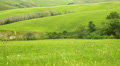 Summer nature landscape, green hills of Tuscany, Italy. Footage