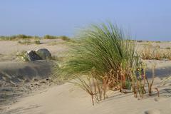 Dune and végétation in France Stock Photos
