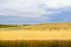 Crop land in summer day Stock Photos