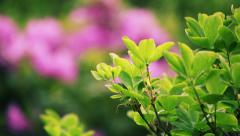 Flowers in changing DOF focus. HD 1080. Stock Footage