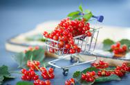 Stock Photo of redcurrant