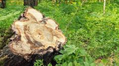 Felled Tree Stock Footage