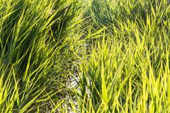 Interweaving high grass Stock Photos