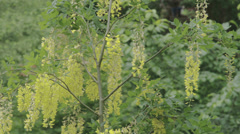 The mimosa green grass fs700 odyssey 7q Stock Footage