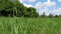 Green Field Camera Slider Stock Footage
