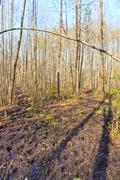 Forest undergrowth Stock Photos