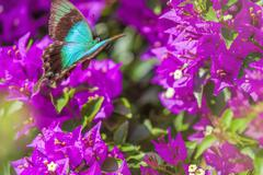 Blue Swallowtail Butterfly Stock Photos