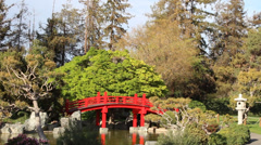 Japanese Garden with Red Bridge, Trees and Pond Stock Footage