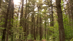 4K UHD - Pan right to left of pine and leaves forest with sun shinning through Stock Footage