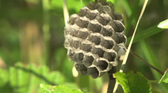 Old nest wasps  on green grass Stock Footage