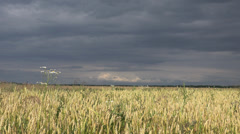 Thunderstorm over wheat field, 4k Stock Footage