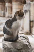 cat on a ruin of an ancient greek town ephesus - stock photo