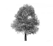 deciduous tree rendered - stock illustration