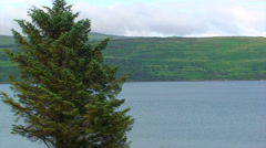 Spruce tree in front of a loch, small sailing boat Stock Footage
