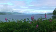 Loch landscape with lupin flowers in the foreground Stock Footage