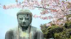 The Kamakura Buddha, medium close-up with cherry blossom - stock footage