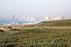 landscape of dune rehabilitation taking place at  beachfront - stock photo