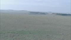 Savanna Africa Grasslands Stock Footage