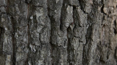 Ants on the bark Stock Footage