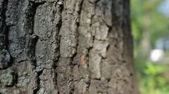 Bark of oak tree Stock Footage