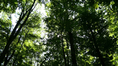 Beautiful Green Forest On A Sunny Day In Full HD Quality. Stock Footage