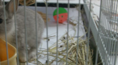 Dwarf bunny frolicking around in cage Stock Footage