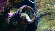 Stock Video Footage of Two Eels Hiding in Algae Covered Pipes