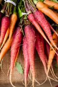 Bunch of multi-colored carrots Stock Photos
