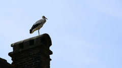 Stork on a chimney Stock Footage