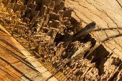 Close up of tree stump, freshly felled, macro Stock Photos