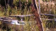 Old Catamaran slide Stock Footage