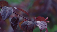 Stock video footage rain drops hit leaves water drops slow motion Stock Footage