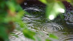 Stock video footage rain pond water drops  slow motion 1 Stock Footage