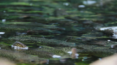 Nature and Wildlife Element - Fish Crowds  Stock Footage