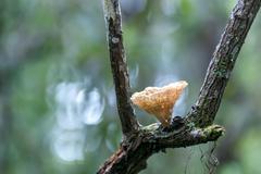Fungus on tree Stock Photos