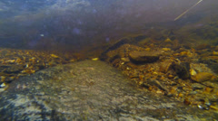 Bash Bish Falls: Underwater Little Fishes Slow-Motion Stock Footage