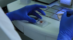 Histological and Morphological laboratory Stock Footage