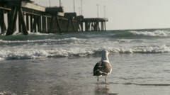 Seagull Flies Away at Beach - stock footage