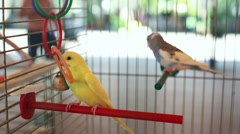 Parrots in the cage Stock Footage