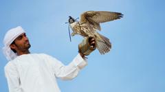 Tethered Bird Prey Arab Falconers Wrist Stock Footage