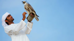 Hooded Falcon Balanced Proud Arabic Owners Wrist Blue Sky Stock Footage