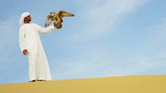 Trained Saker Falcon Balanced Arabic Male Falconers Glove Stock Footage