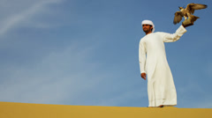 Falco Cherrug Falcon Balanced Arabic Male Owners Glove Desert Dunes Stock Footage