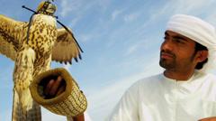 Trained Saker Falcon Balanced Falconers Glove Stock Footage
